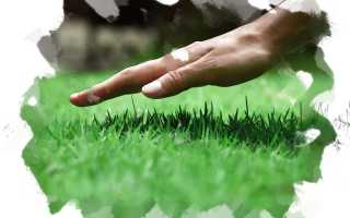 Уход за газоном осенью или подготовка к зиме